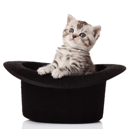 kitten sitting in hat  little kitten on white background  photo
