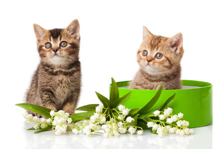 kitten in green gift box isolated on white  photo