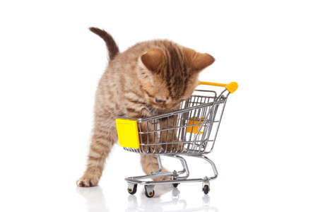 osolated: british cat with shopping cart isolated on white  kitten osolated Stock Photo