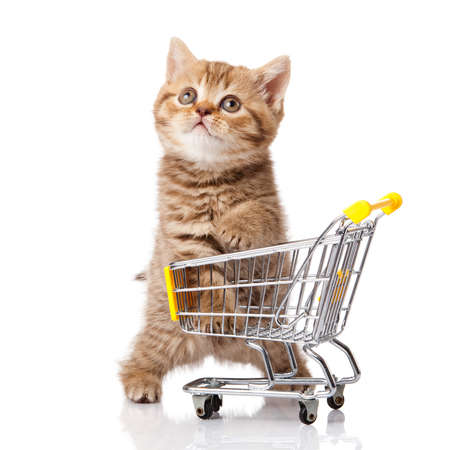 british cat with shopping cart isolated on white  kitten osolated 免版税图像