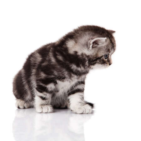 kitten on a white background photo