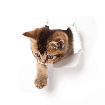 kotek: kot patrząc w papier Zdjęcie Seryjne