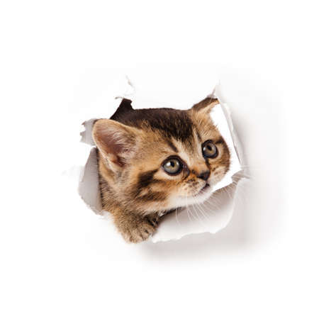 cat looking up in paper  Stock Photo