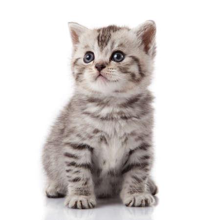 kitten on a white background photo