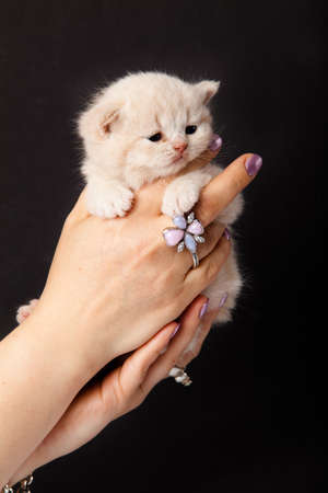 small kitten on a hand photo