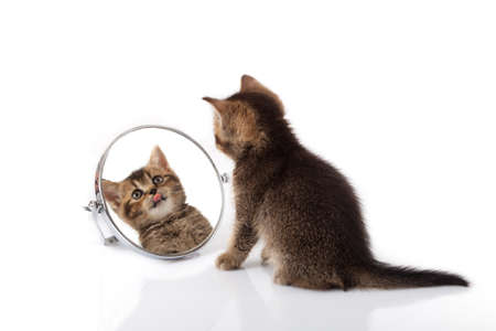 kitten with mirror on white background. kitten looks in a mirror. 免版税图像