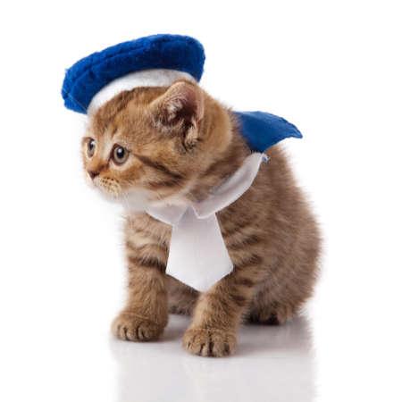 furry animals: gattino su uno sfondo bianco