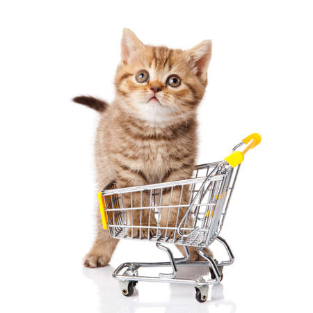 pet store: british cat with shopping cart isolated on white. kitten osolated