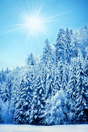 Trees covered with hoarfrost  Beautiful winter landscape with snow covered trees Stock Photo - 17688202