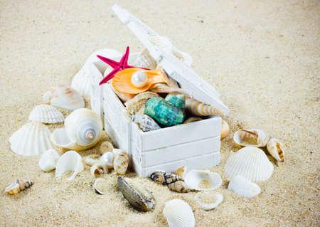 The exotic sea shell   treasure from the sea  photo