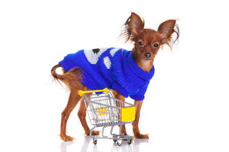 Toy Terrier with shopping cart isolated on white  Funny little dog  Russian toy terrier on a white background photo