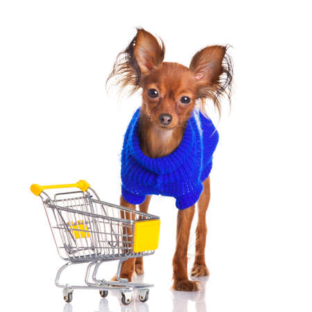 Toy Terrier with shopping cart isolated on white. Funny little dog. Russian toy terrier on a white background photo