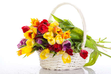 Basket of  Tulips isolated on white background. Bouquet of tulips in a basket photo