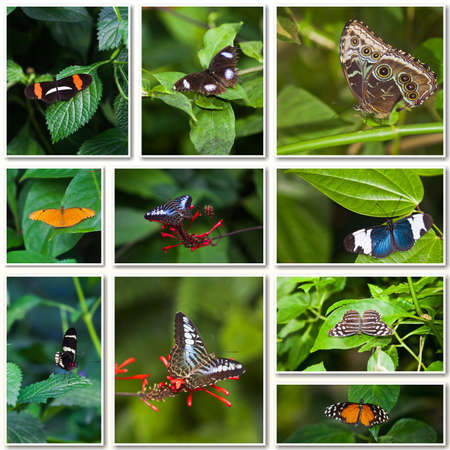 Butterfly Collage  Collection of colored butterflies photo