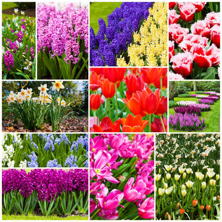 flowers collage  Beautiful spring flowers photo
