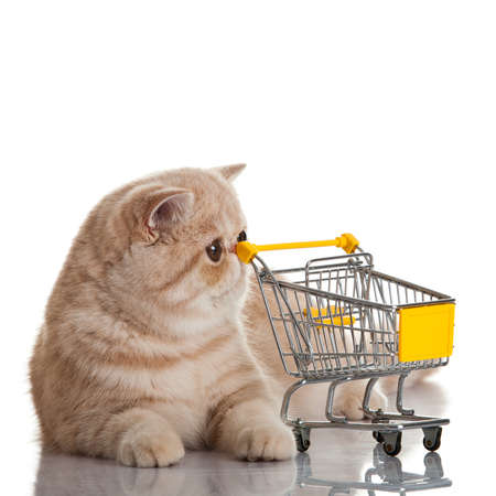 Exotic shorthair cat. cat with shopping cart isolated on white photo