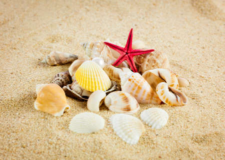 perl: pearl on the seashell . The exotic sea shell . Treasure from the sea. Stock Photo