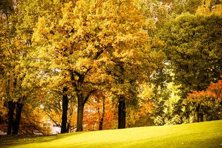 veluwe: Beautiful autumn