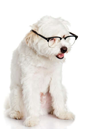 dog in glasses isolated on white background photo