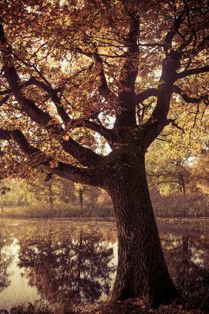 Colorful autumn landscape.Nature background Stock Photo - 21652584