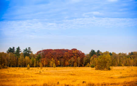 Colorful autumn landscape. Beautiful autumn forest photo