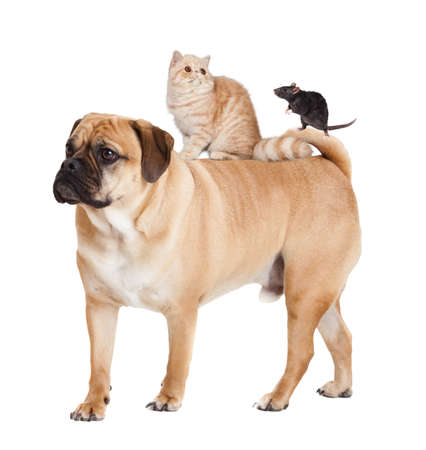 Dog, cat  and mouse isolated Stock Photo - 21826129