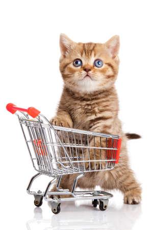 Britse kat met winkelwagentje op wit wordt geïsoleerd. kitten Osolated