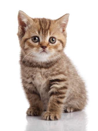 Gattino su uno sfondo bianco Archivio Fotografico - 22298012