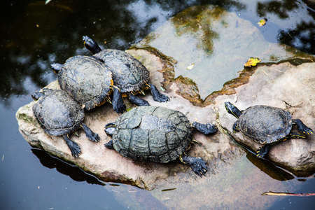 Turtles. photo