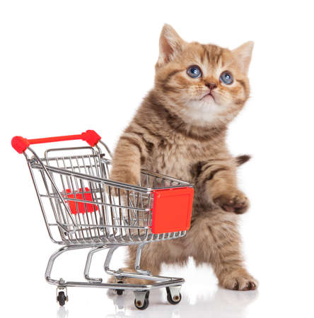 british cat with shopping cart isolated on white. kitten osolated photo