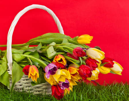 Basket with colorful tulips. photo