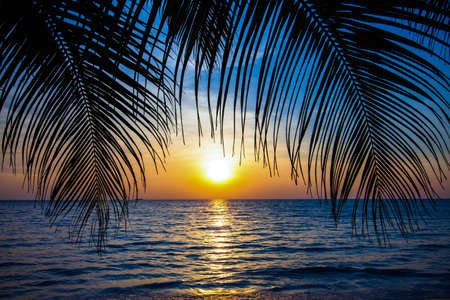 Beautiful tropical sunset with palm trees.Tropical beach. palms on the ocean beach