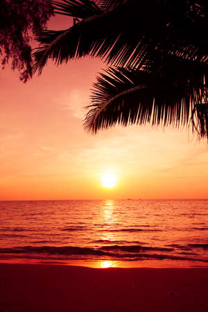 palm trees silhouette on sunset tropical beach. Tropical sunset photo