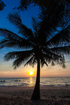 Beautiful tropical sunset with palm trees.Tropical beach. palms on the ocean beach photo