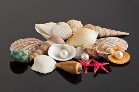 sea star and shells photo