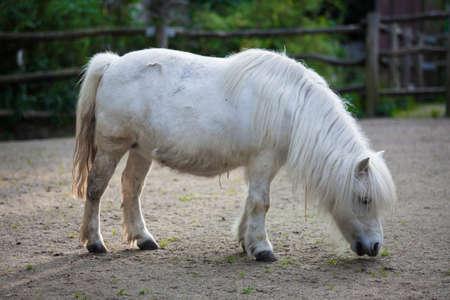 inaction: White pony