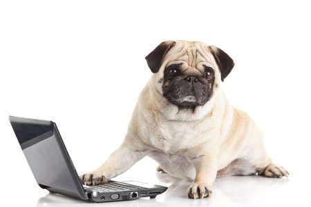 Pug Dog with laptop. Banco de Imagens - 24978939