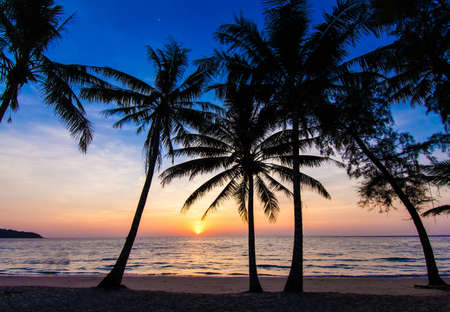 bounty: Puesta del sol agradable. Puesta del sol tropical, palmeras