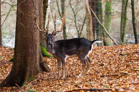 meadowland: Deer family Stock Photo
