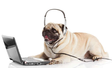 call center agent. pug dog telephone operator photo