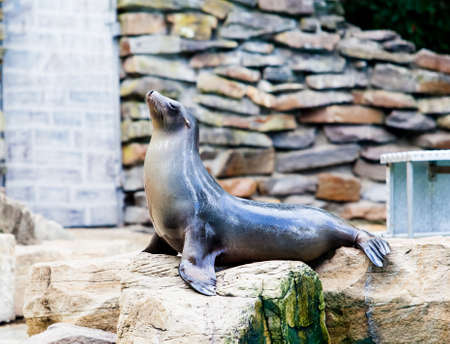Sea Lion. Seal photo