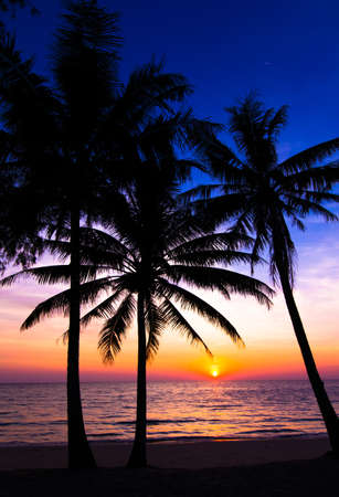 Sunset On The Beach Palm Trees Silhouette Tropical Photo