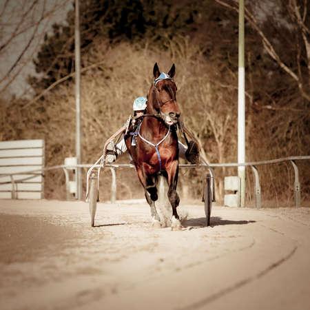 blinders: Harness Racing