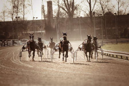 trotters: Harness Racing