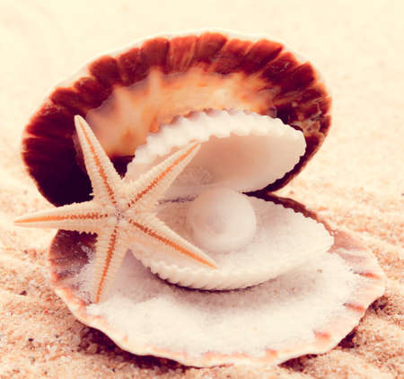 Shell with a pearl  with a  instagram filter photo