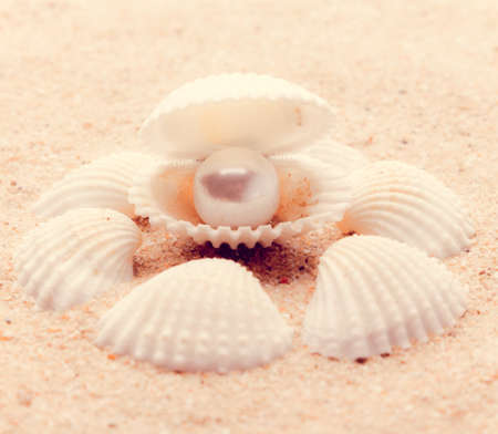 perl: shell on beach  with a instagram filter Stock Photo