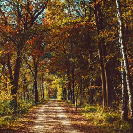road autumnal: Forest road. Landscape. avenue of trees in the park. misty autumn forest