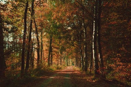 Forest road. Landscape. avenue of trees in the park. misty autumn forest photo