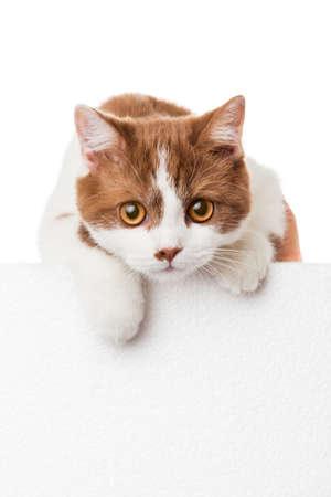 Leuk katje met lege billboard Stockfoto