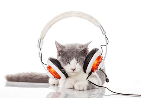 Cute kitten and headphones